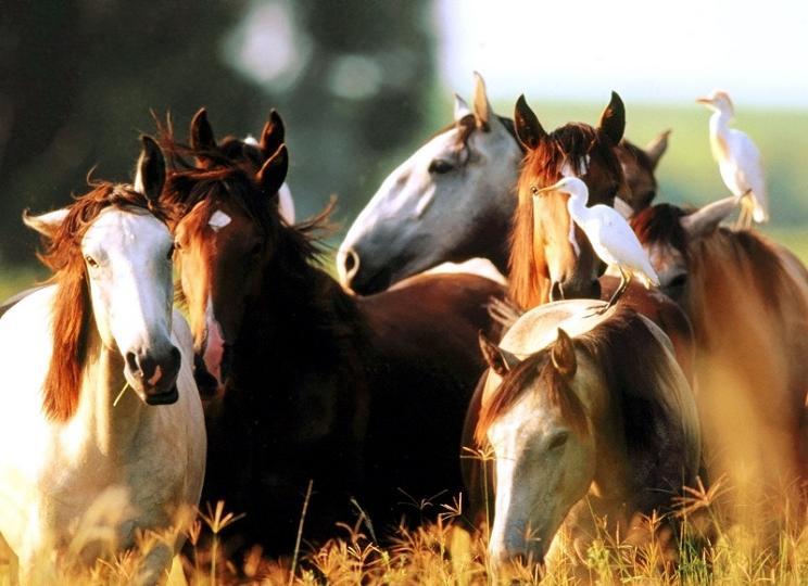 песня конь пелагея слушать и текст